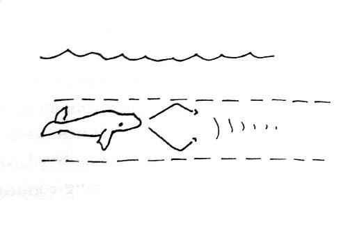 horowitz-whale